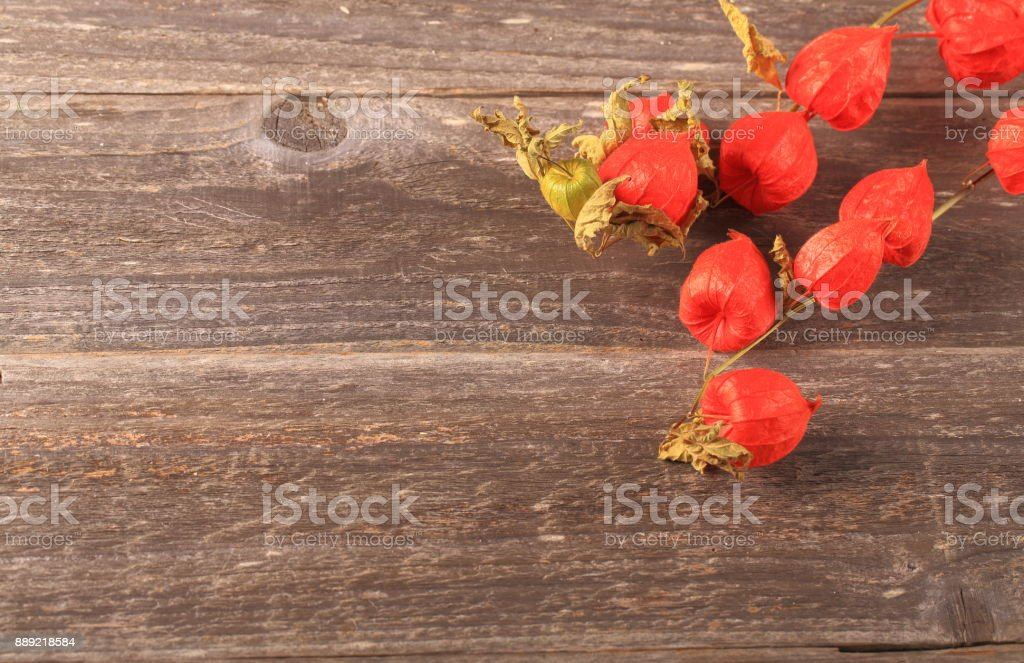 Dried physalis on wood background stock photo
