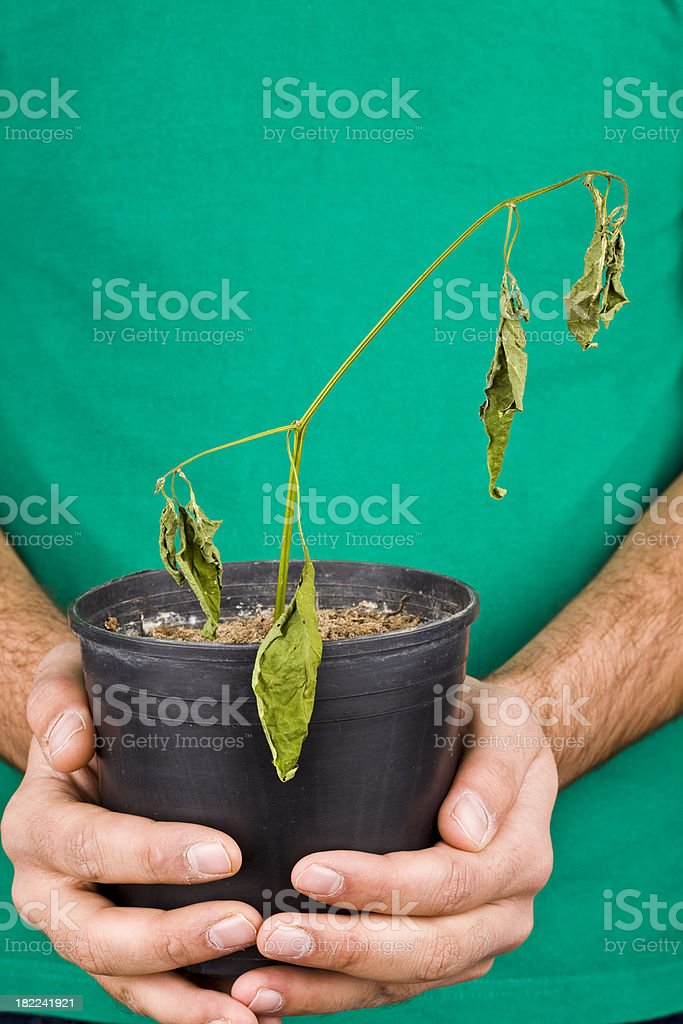 dried plant royalty-free stock photo