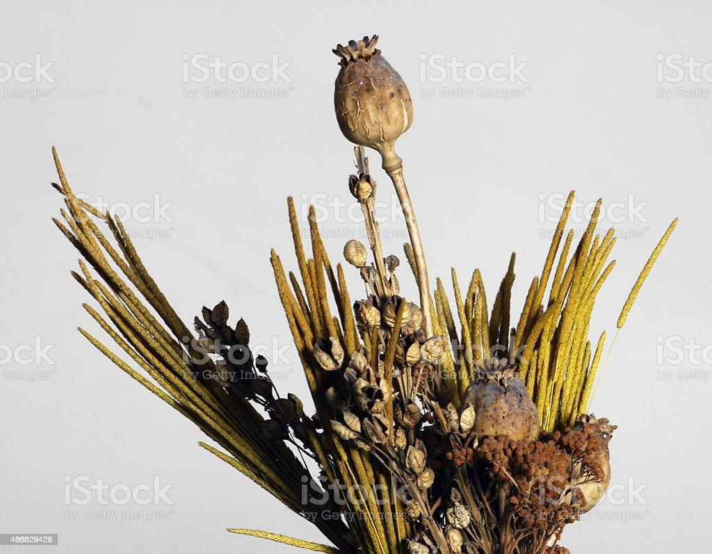 Dried plants stock photo
