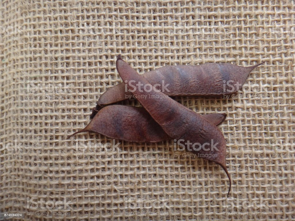 Dried pods of barbados flower fence stock photo