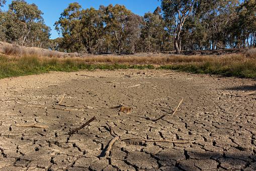 Dried pond