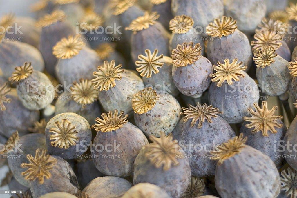 Dried Poppy Flowers royalty-free stock photo