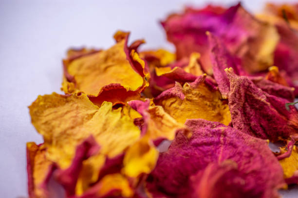 dried red orange and yellow rose petals stock photo