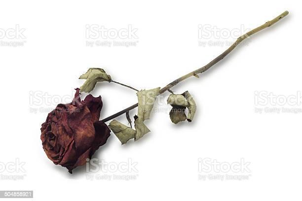 Dried red rose picture id504858921?b=1&k=6&m=504858921&s=612x612&h=h4c6x1s8fczzbnzenupq37v 1 c1utesjplth j65o4=