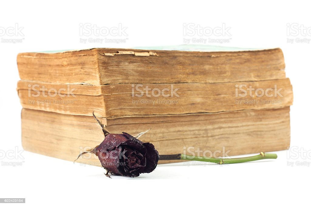 Dried rose and old books on white background. stock photo
