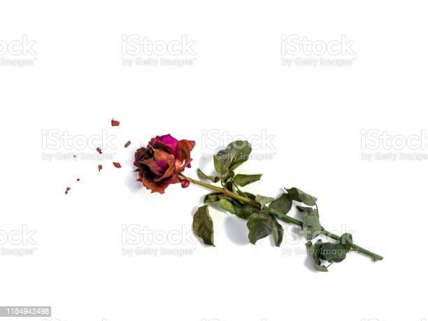 Dried rose flower head isolated on white background cutout broken picture id1154942498?b=1&k=6&m=1154942498&s=612x612&h=gh3rohhay07aqgxqjj93d7qwjggoapmpo5pou6q64la=