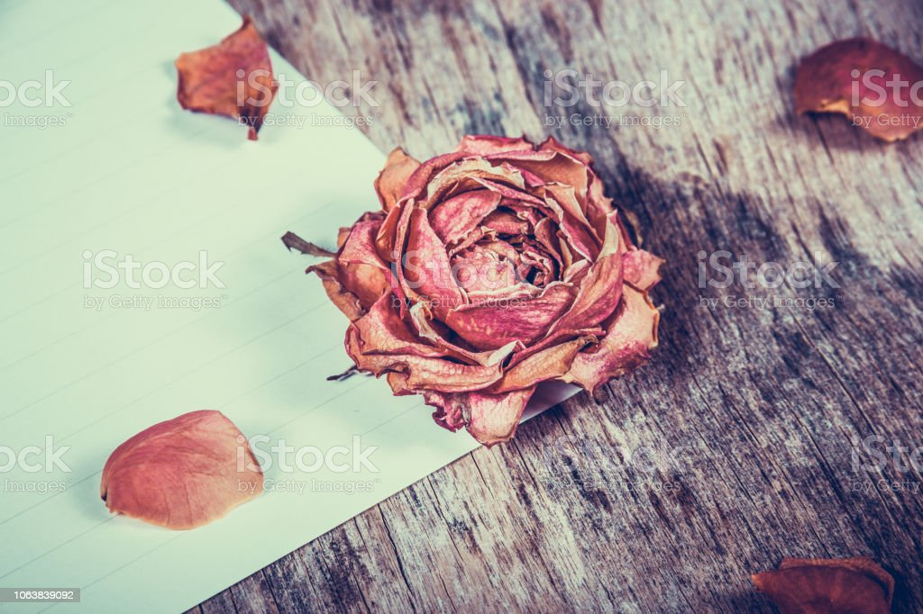 Dried rose on a white sheet. Dried rose on wooden background.
