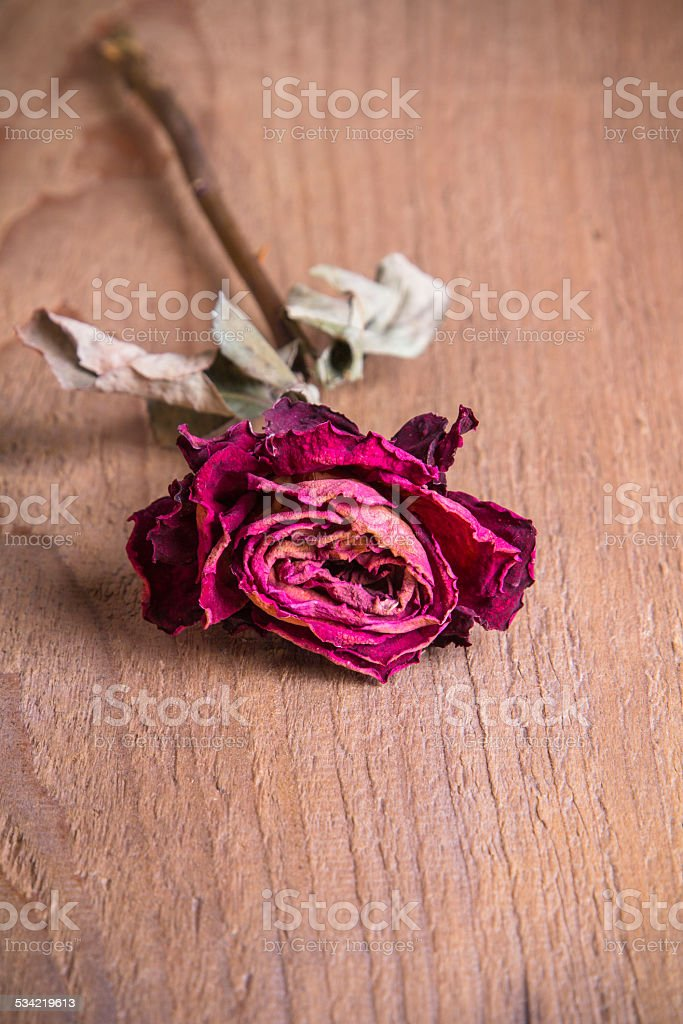 dried rose on a wooden table