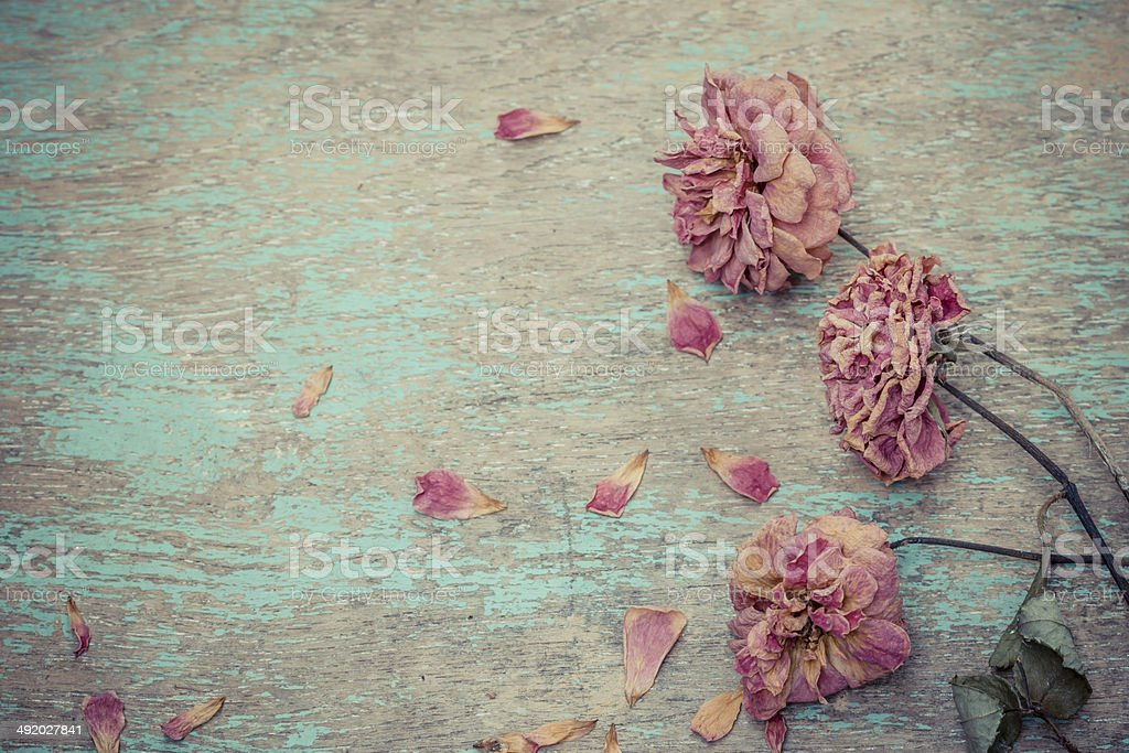 Dried rose on old vintage wood plates stock photo