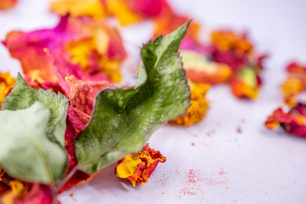 dried rose petals and leaf stock photo