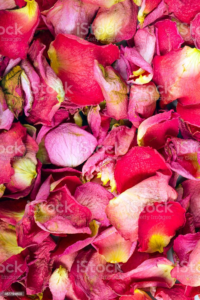 Dried Rose Petals Texture For Background Stock Photo & More Pictures of 2015