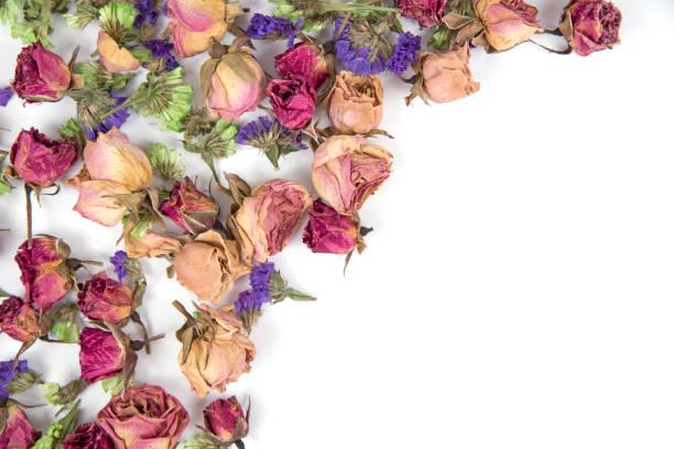 Cтоковое фото Dried Rose
