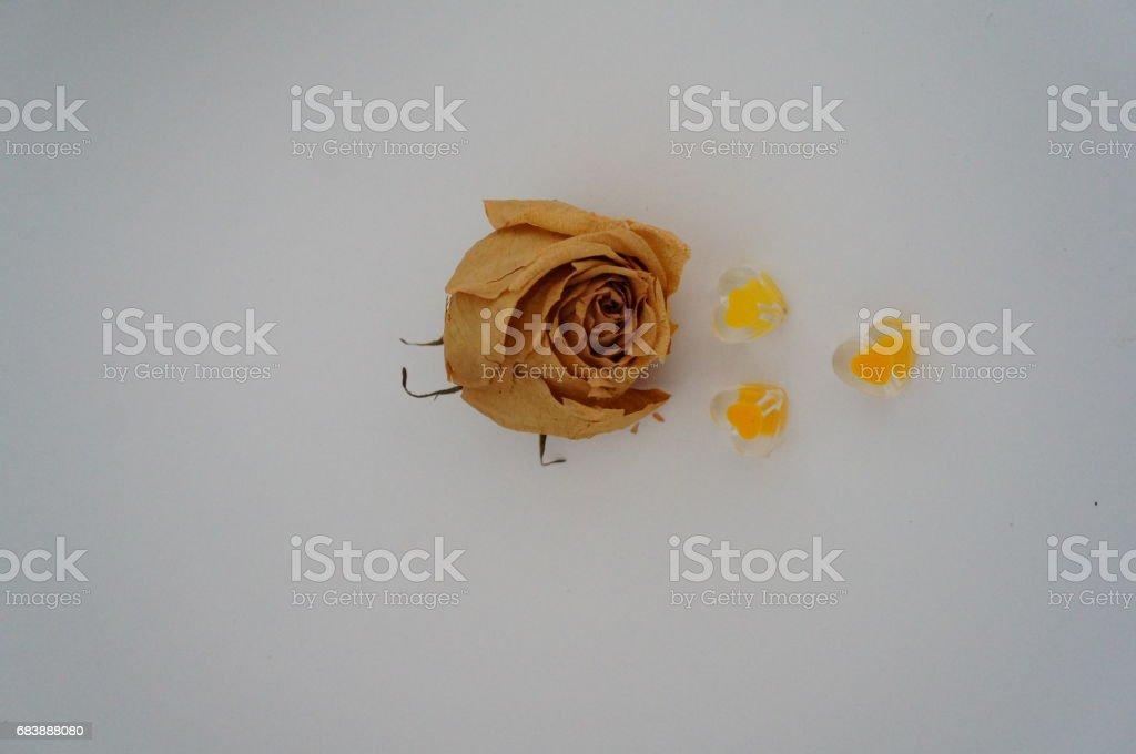 засохшая роза stock photo