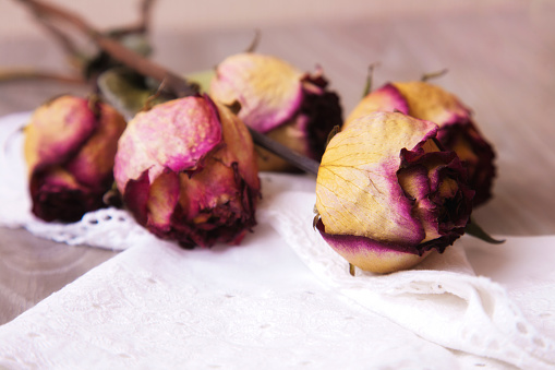 Dried rosebuds on the table