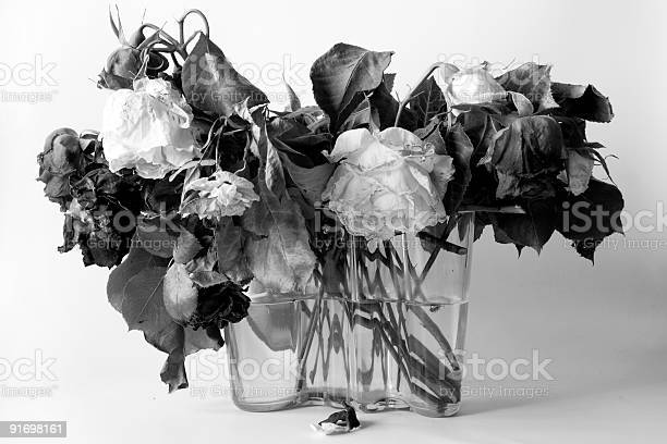 Dried roses bampw picture id91698161?b=1&k=6&m=91698161&s=612x612&h=zpgibln4iiggpmuuf8alej ntbn25sck9qxbv465tmc=