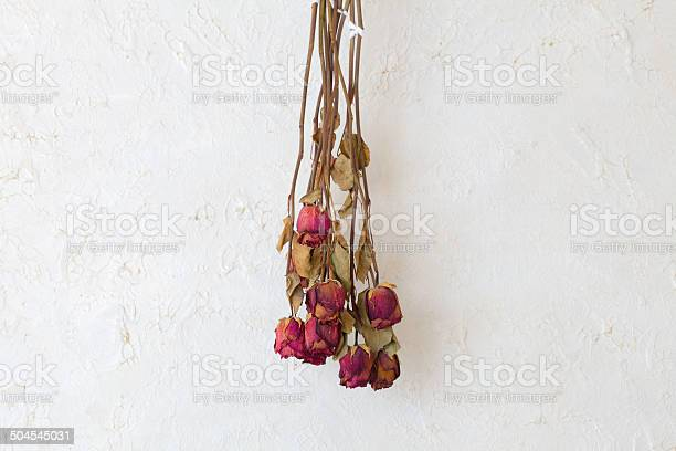 Dried roses flowers frame blank copy space on white wall picture id504545031?b=1&k=6&m=504545031&s=612x612&h=rhaov0t7au5delasnkz7r7sym2wjoxcf9h1tpguxwaa=