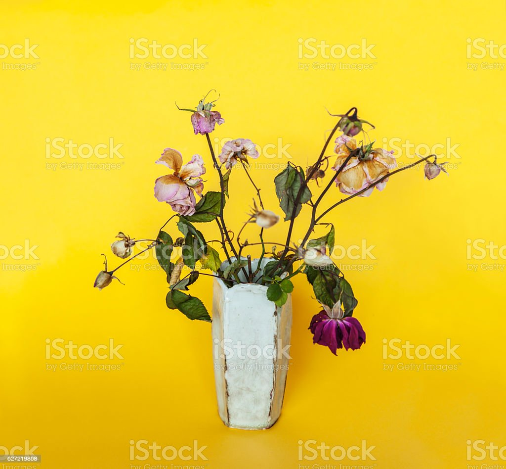 Dried roses from the garden in  white vase against yellow. stock photo