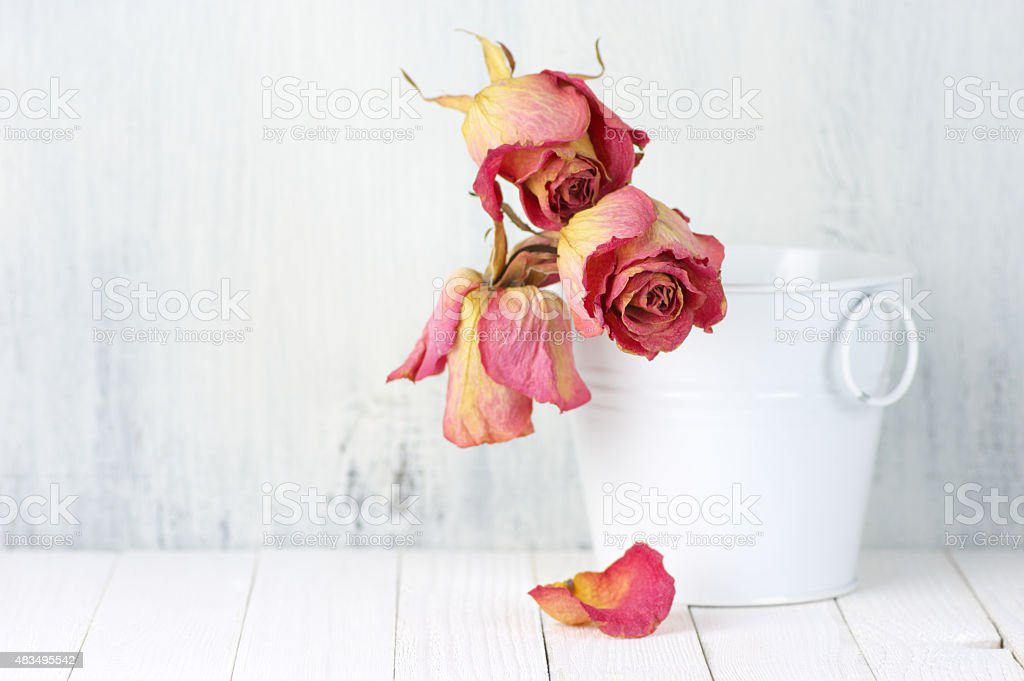 Dried roses in bucket stock photo