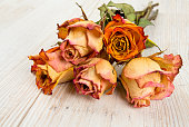 dried roses on wooden surface