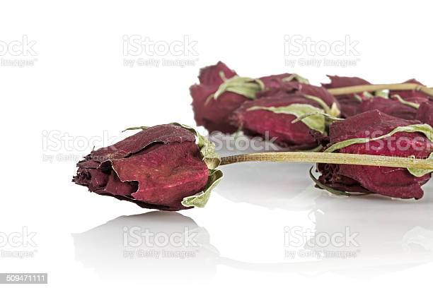 Dried roses picture id509471111?b=1&k=6&m=509471111&s=612x612&h=90yrxu3pfbyuf3zjuecq8cmehop2anvaiewb yriovo=