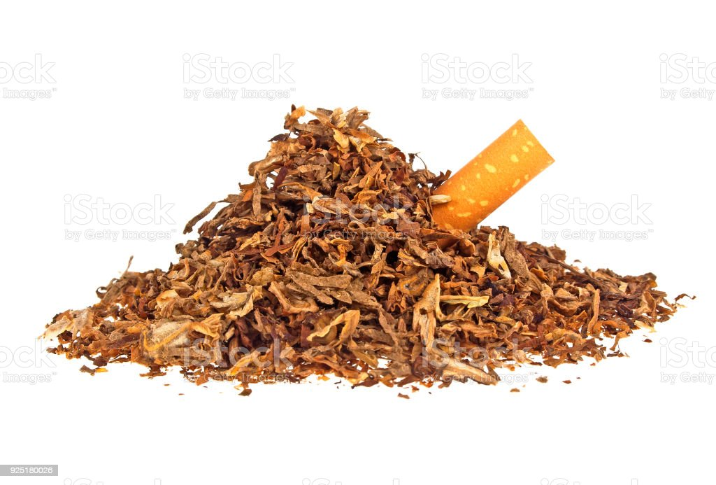 Dried smoking tobacco and cigarette filter on a white background stock photo