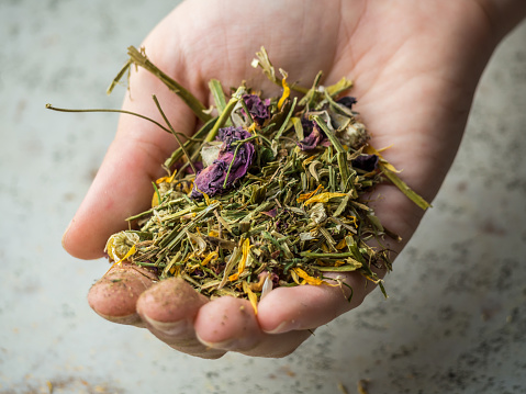 dried tea in the hand