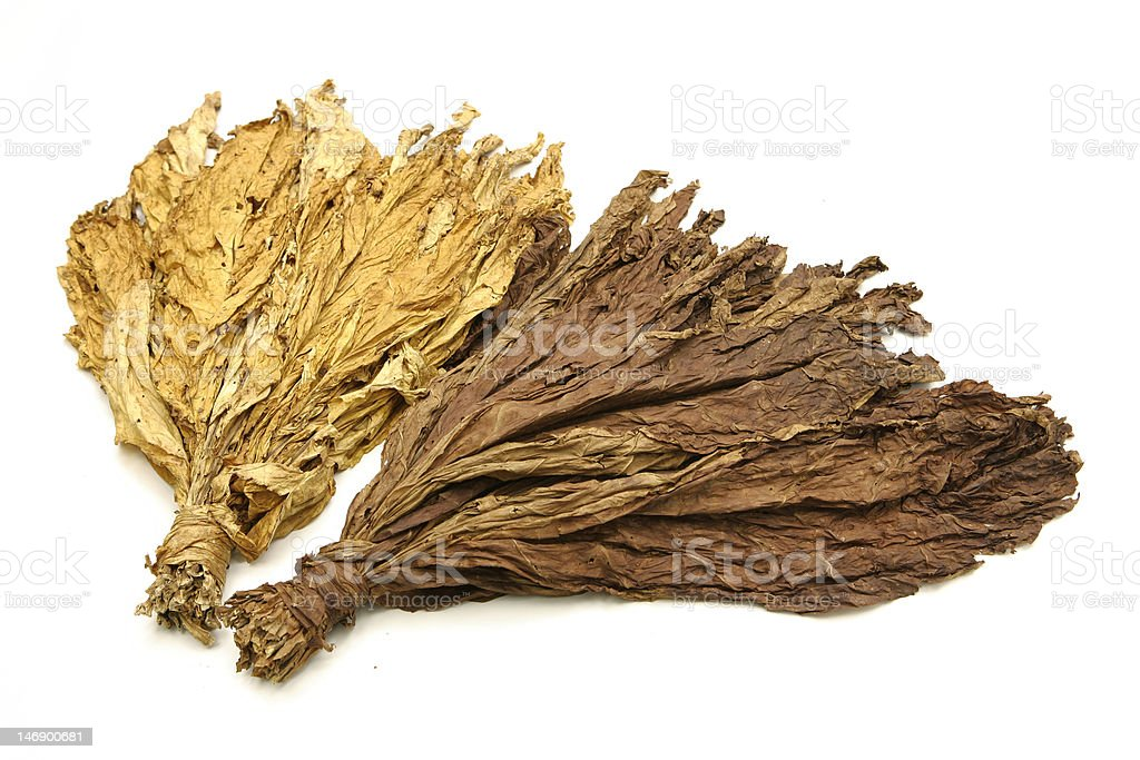 Dried tobacco leaves on white background stock photo