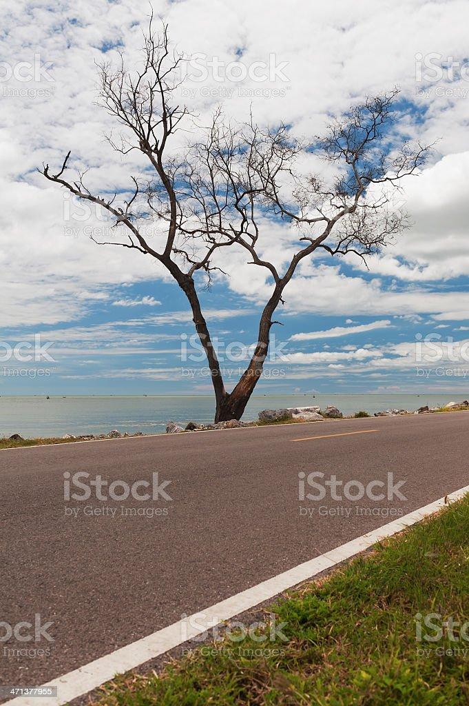 dried tree and coastal road in Thailand royalty-free stock photo