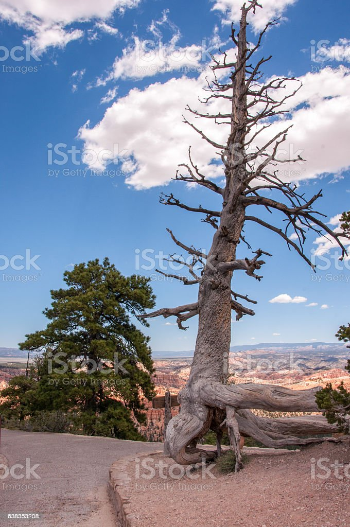 Dried tree in the national park Bryce Canyon, Utah, USA stock photo