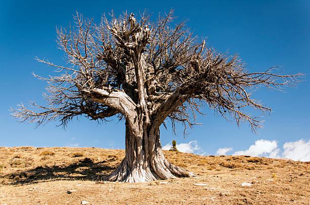 dried tree stock photo