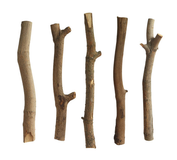 Dried tree trunks set stock photo