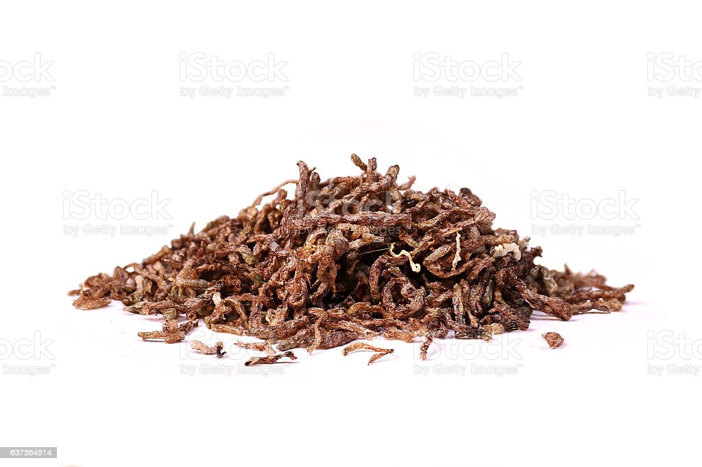 Dried tubifex worms fish food for aquarium stock photo