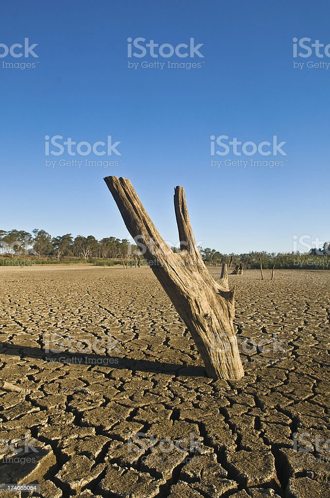 Deep cracks and a tree stump in a dried dam - result of the drought....