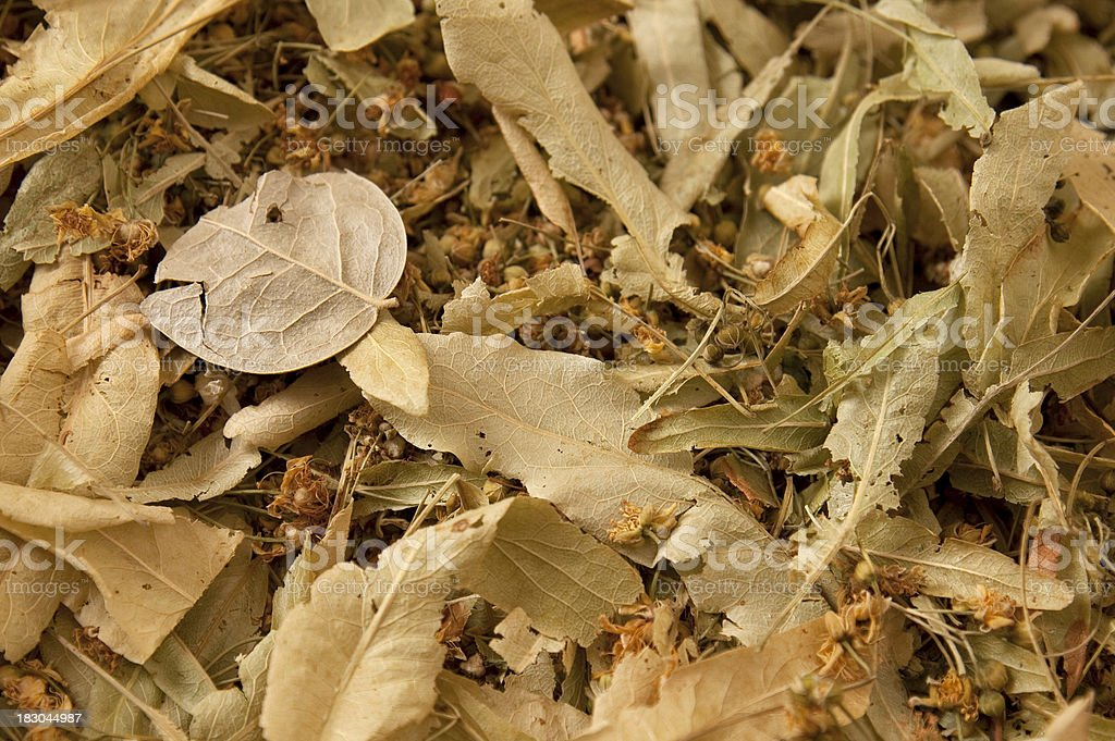 Dried up natural herbs royalty-free stock photo