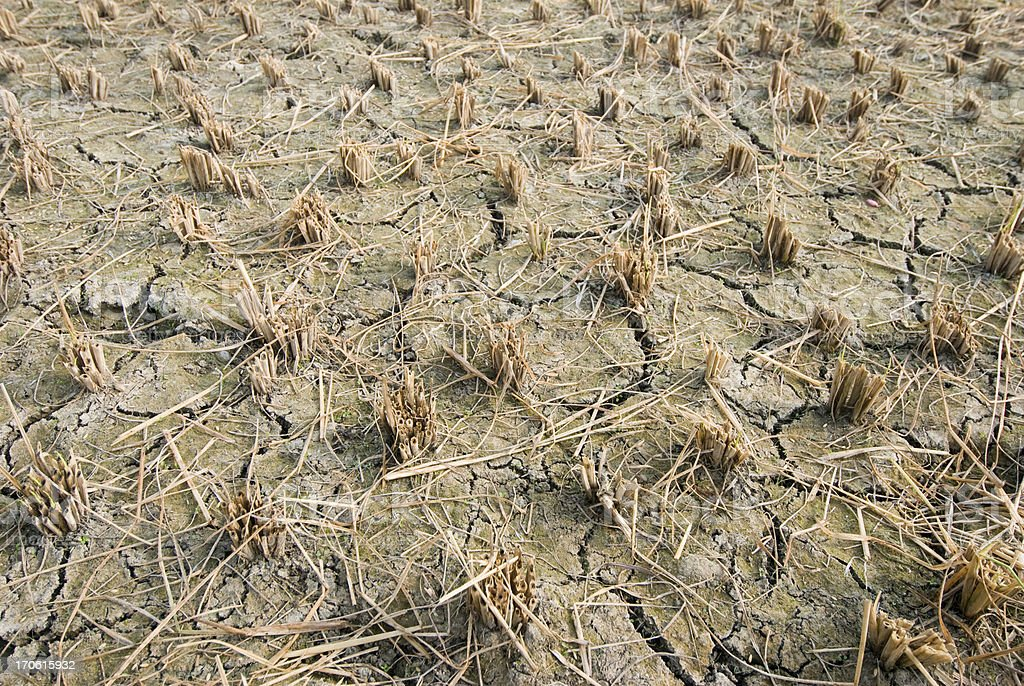 Dried Up Rice Paddy stock photo