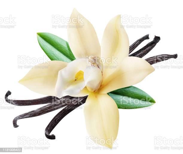 Dried vanilla sticks and orchid vanilla flower picture id1131005422?b=1&k=6&m=1131005422&s=612x612&h=q9384n9twnmj sf9knzayuvnjsagp5boy3aehi0lkjy=