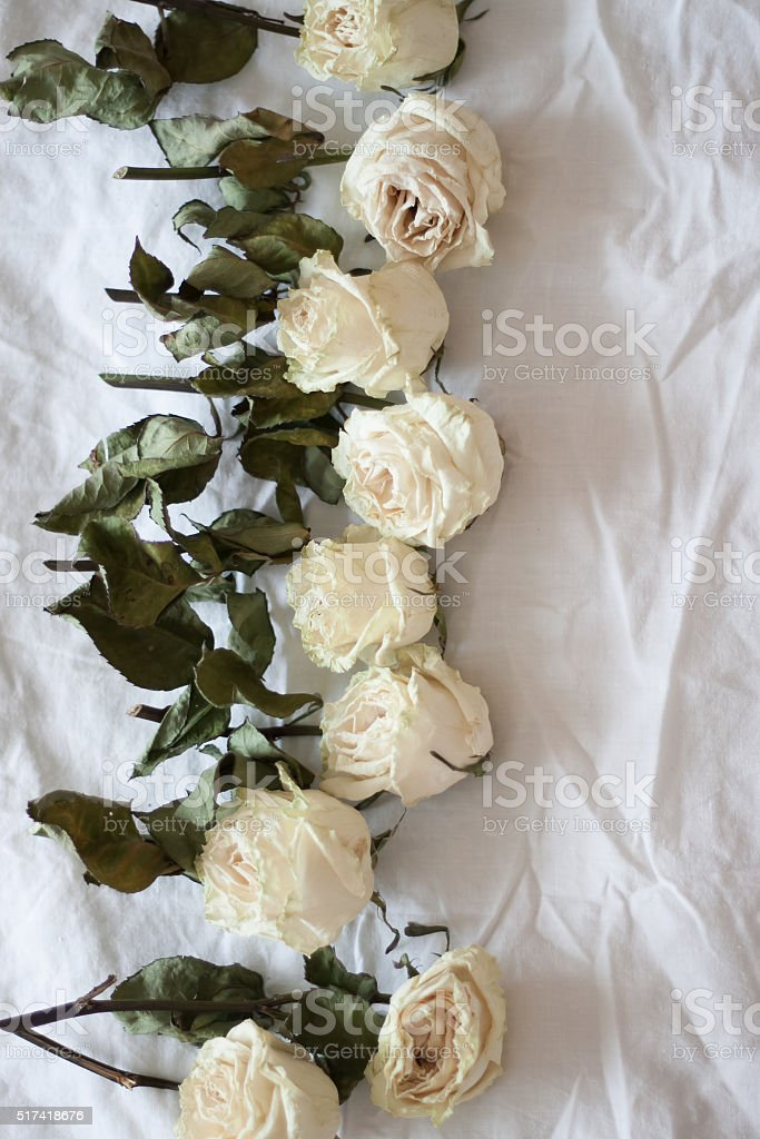 Dried White Roses Stock Photo More Pictures Of Aging Process Istock