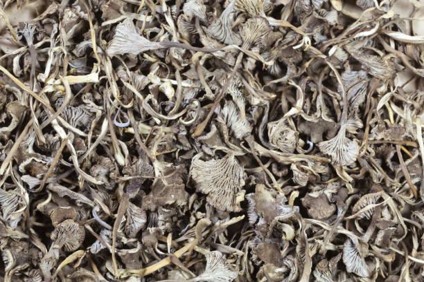 Dried winter mushrooms, Craterellus tubaeformis stock photo