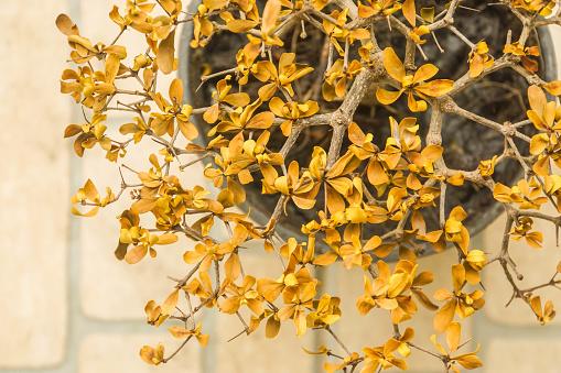 Gedroogd Gele Bladeren Op Kleine Plant In Pot Stockfoto en meer beelden van Abstract