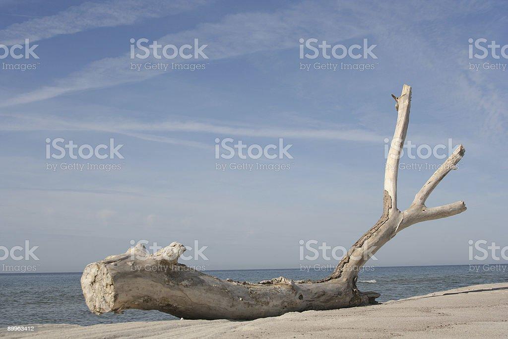 Dried-Up Tree royalty-free stock photo