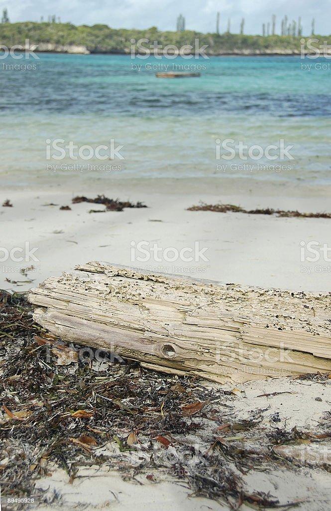 Pełzania drewniany na tropikalnej plaży zbiór zdjęć royalty-free