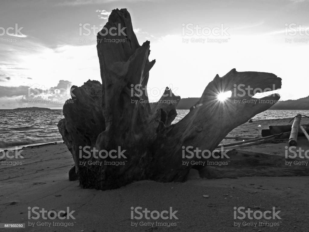 Drift wood on the beach in the backlight stock photo