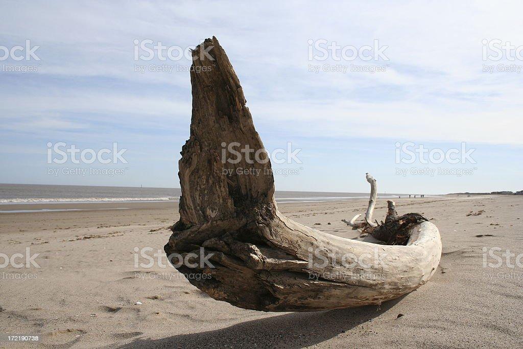Drift Wood on the Beach royalty-free stock photo