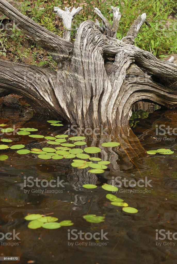 Drift Holz – Foto