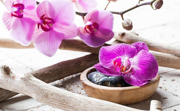 drift holz mit orchideen für schönheit atmosphäre - steingut geschirr stock-fotos und bilder