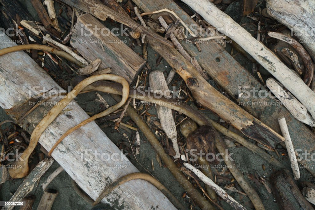 Driftwood and bull kelp washed ashore. royalty-free stock photo