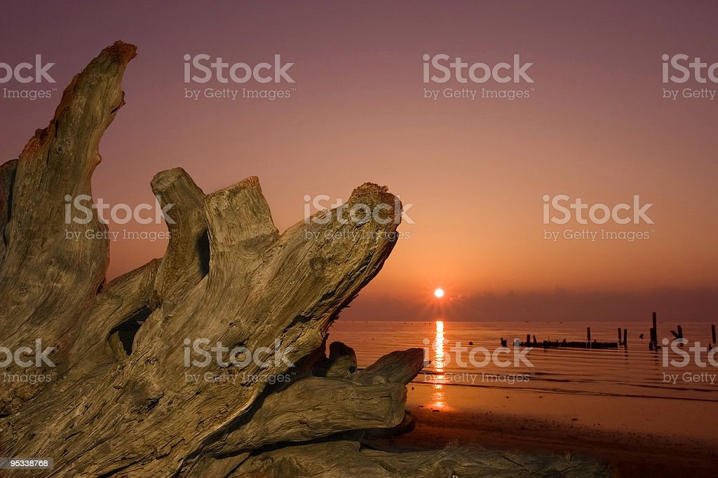 Driftwood and Rising Sun royalty-free stock photo