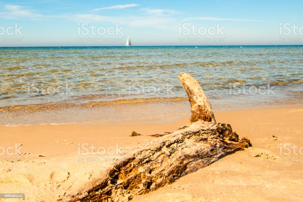 Driftwood at a beach of the Baltic Sea with sailing boat stock photo