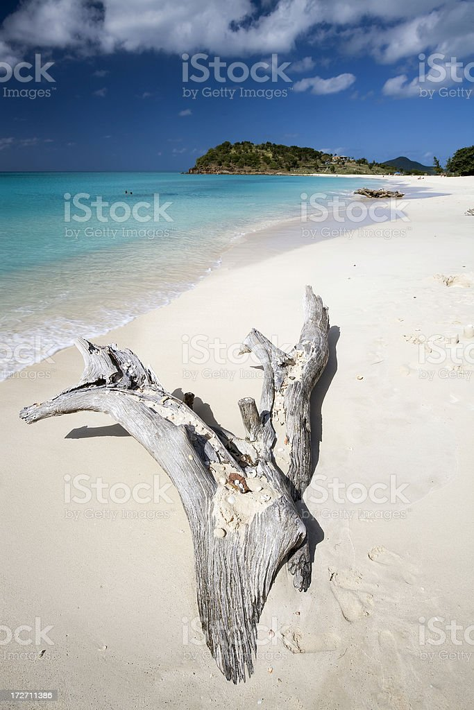 Driftwood at Ffryes Bay Antigua royalty-free stock photo