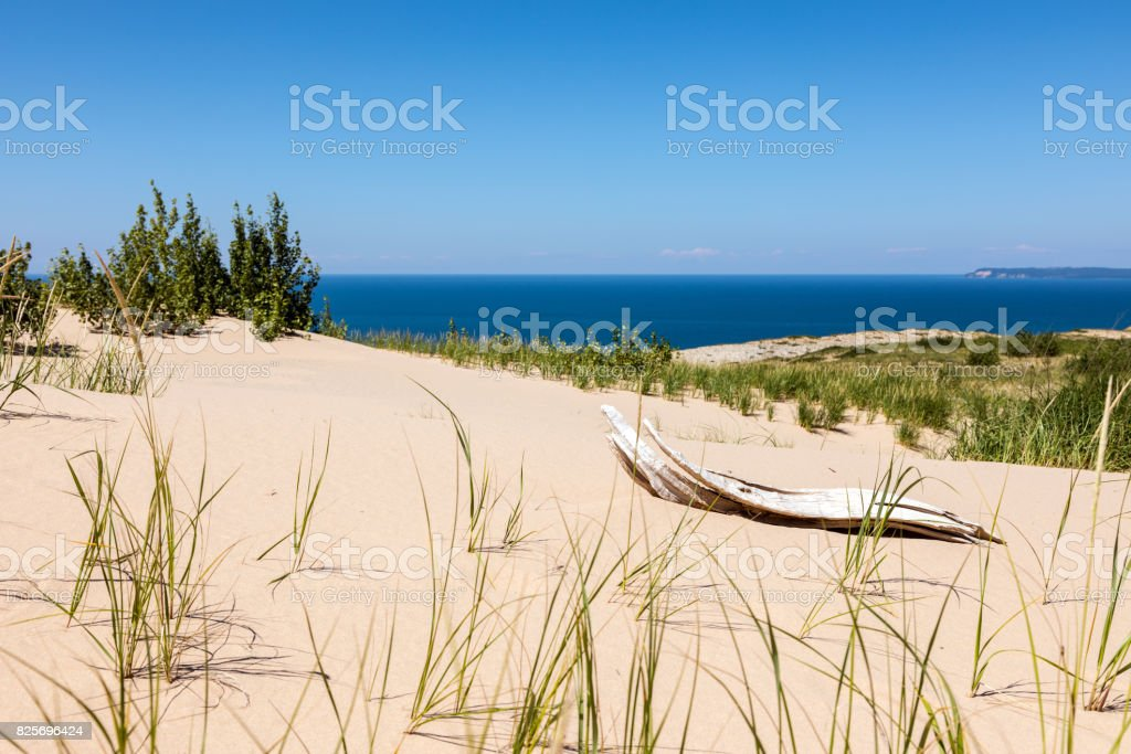 Driftwood at Sleeping Bear Dunes National Lakeshore stock photo